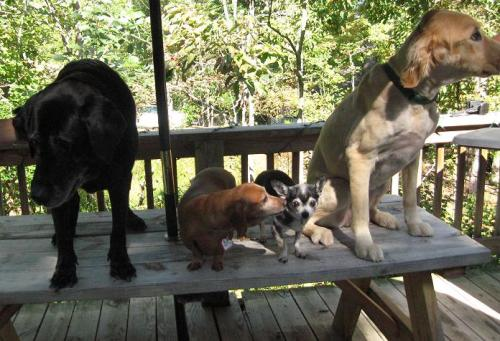 Dogs on Picnic Table small